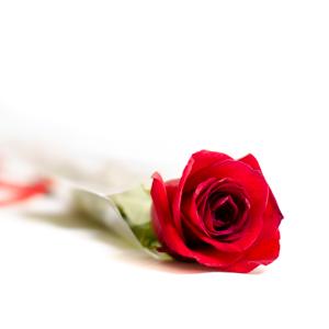 Rosa adornada - Desayunos con sonrisa